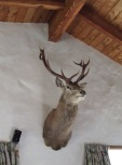 You can't have a house like this without trophy deer heads and antlers on the walls.