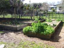 The Little Fulla and I weeded in and around most of the Vege Garden.