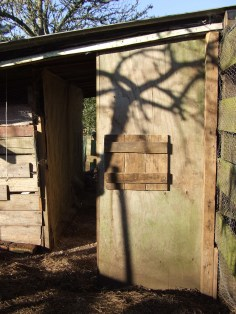 The far end of the coop on the outside, complete with cover for the pre-existing 'window'.