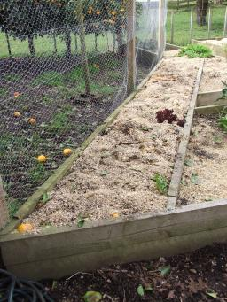 The Climbing Bed got replenished with all the excess soil and compost from the work site and covered back over with the wood shavings mulch.