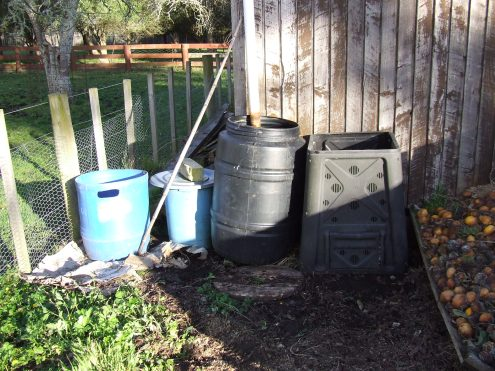 Look at the sun! We cleared away enough weeds to site the potato barrels here: The blue one on the far left and the black one on the far right. The lidded blue bin contains compost tea.