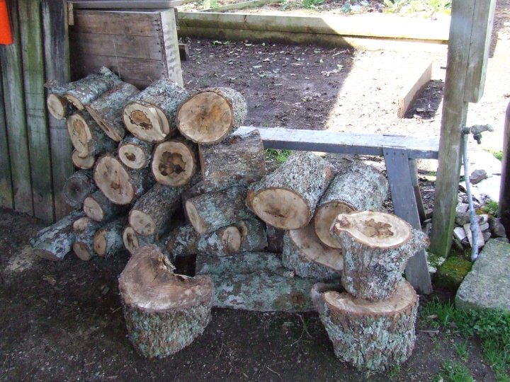 The firewood pile