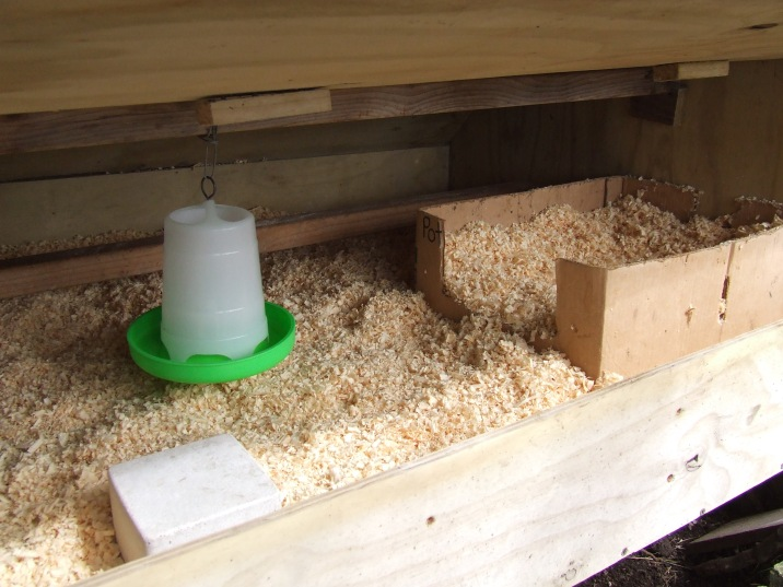 Inside the Broody Coop we have a spacious floor carpeted in wood shavings, complete with a roomy nestbox and food and drink stations. The water bell is now sitting on the stone block. The top roost came in handy for hooking up the food vessel with wire. Hanging = less mess and wastage.