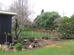 Unfortunately, the apricot tree had to be cut down due to canker and the plum tree along the fence was taken out due to unproductiveness. The remaining plum was pruned hard to re-shape it. A dwarf mandarin and a dwarf orange tree, plus ornamentals are being planted.