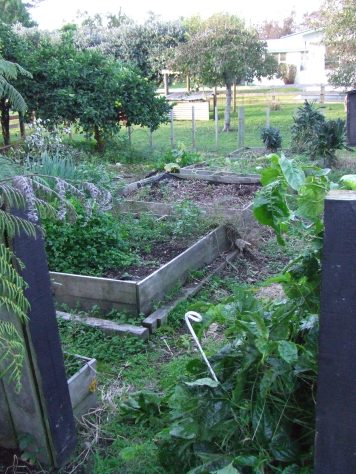 The Vege Garden when we moved in: four small square beds and a lot of random things lying around.