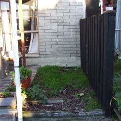 Random weedy barked area.