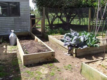 The kumara end of the new vege bed was filled first, then the remaining kumara shoots were planted.