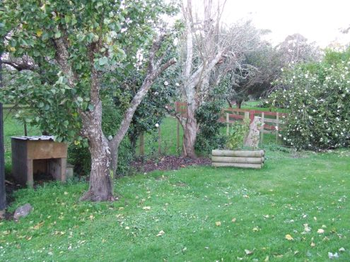 There used to be two plum trees and an apricot tree, with crowded shrubs around them.