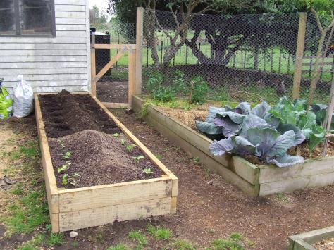 Now the whole vege bed has been filled and planted.