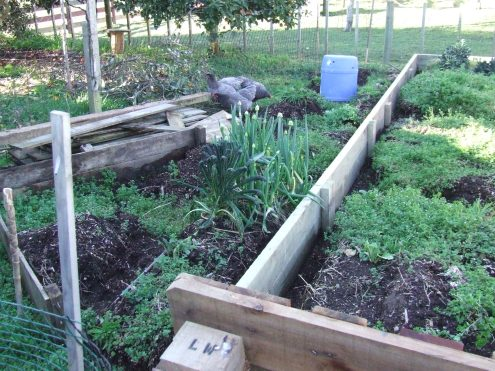 The 8-metre-long bed was just the beginning. The chickens are helping.