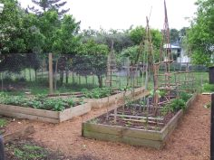 The next three vege beds were built and a fence to keep the chickens in the Orchard Pen.