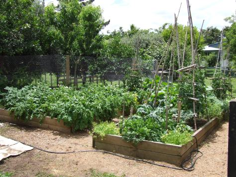 Growing lots of stuff.