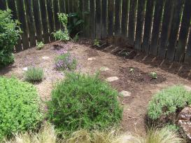 I topped up and leveled out the soil, installed the remaining stepping stones, weeded and planted some more little herbs: parsley, basil, borage for the bees and a Cavolo Nero kale, because they just look interesting. There is one more spot for another coloured sage.