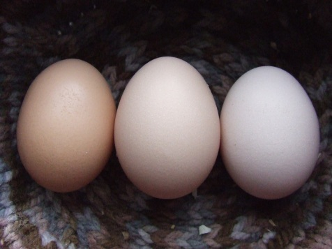 We had a supply of eggs for most of the year, but did have to buy some when things got dire.