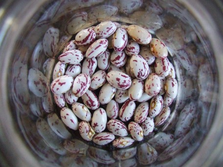 Borlotto Fire Tongue beans to dry.
