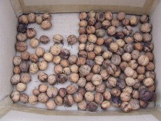 Some of the walnut harvest.