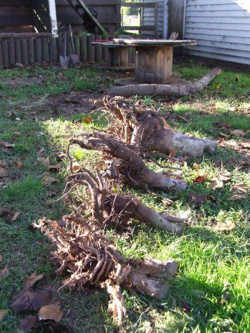 So... many... stumps...