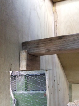 The small coop got nestbox dividers removed and two new, removable roosts made.
