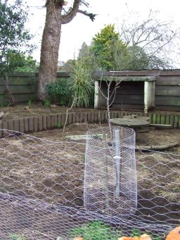 An apricot tree and an almond tree were planted in the Cedar Pen.