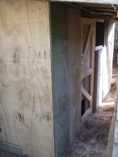 Then a new coop somehow appeared under the woodshed roof. Just casually, with a LOT of time and effort!