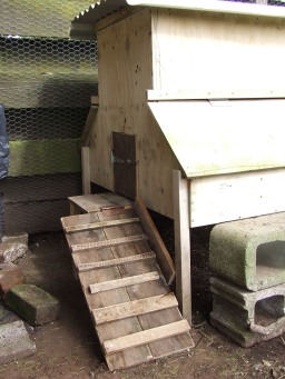 The small coop also got a new ramp and door.