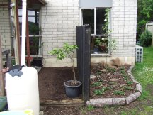 Dealing with this area and creating a new garden bed, the Apple Tree Garden, was a great garden improvement. And installing the rain barrel here has already been helpful.