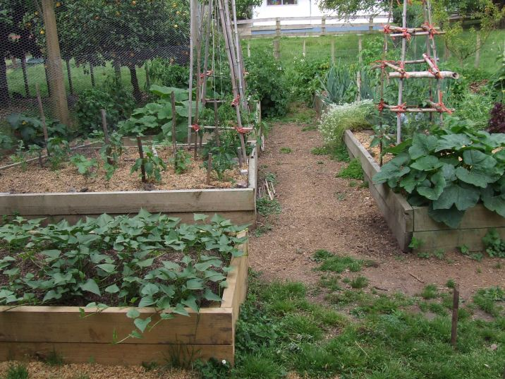The Vege Garden at the start of this Summer.