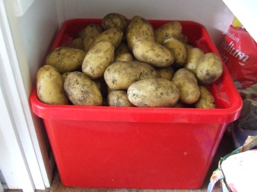 The Storage Improvement Plan has already begun and I'm rather excited about having things stored tidily. The potatoes, well, at least the Agrias, are now in a potato bin instead of a cardboard box. There's a long way to go, though.