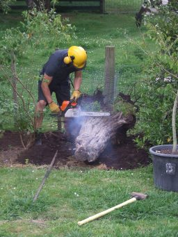 The Husband got heavy handed with another stump, this one in the Plum Tree Garden.