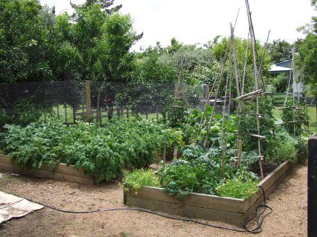 The vege garden last Summer.
