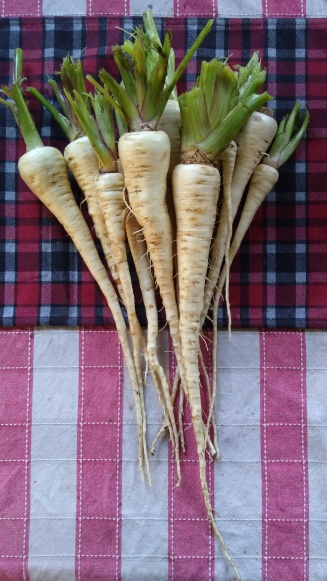 A number of parsnips have been roasted.