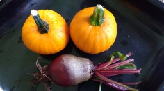 A couple of early Wee Bee Little pumpkins and a beetroot.