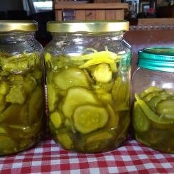 Pickled gherkins, or as some countries call them, pickles.