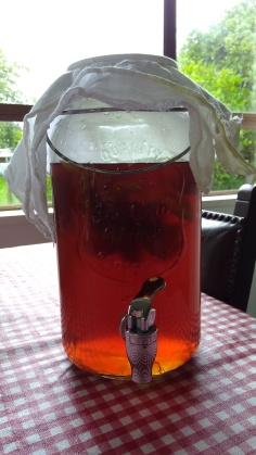 Kombucha must be brewed in a glass container with a cloth on top.