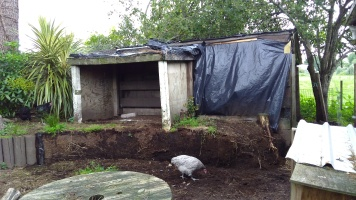 I removed all the logs and the black plastic that was between them and the soil. The chickens are enjoying new sources of dirt.