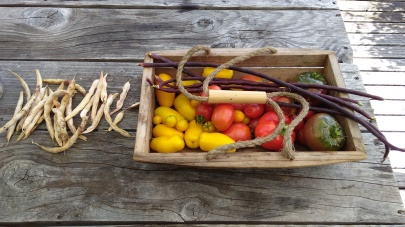 I like harvesting things in so many different colours.