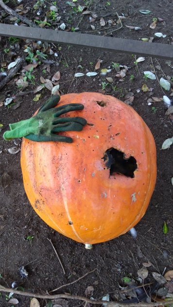 Then a bigger hole came along, and now, here lies the pumpkin in it's orchard grave, rotting away and scaring the chickens.