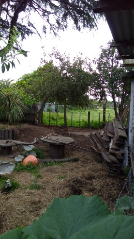 And now, we get to look at this. Happy days! The apple tree is on the left and the pear tree on the right.