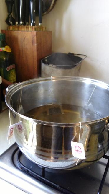 Brewing sweet tea for the kombucha.