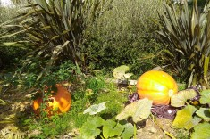 The two giant pumpkins out the front.