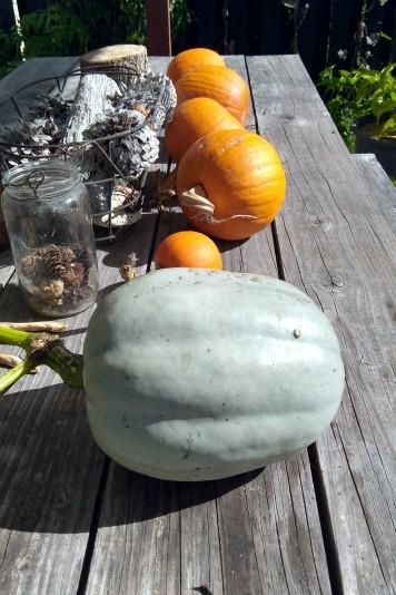 Could this Crown pumpkin become a pumpkin racer?