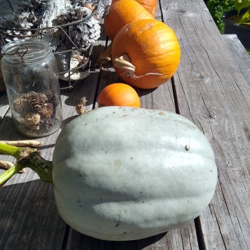 Could this Crown pumpkin become a pumpkin racer?