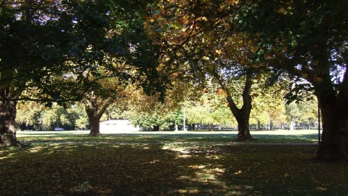 Christchurch has loads of beautiful mature trees, especially in the Botanic Gardens.
