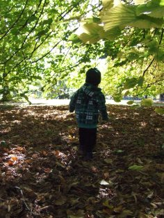We were not disappointed in the amount of fallen leaves.