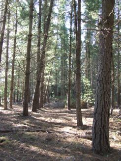 McLeans Forest.
