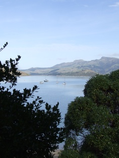 Corsair Bay, showing us why there are so many beautiful paintings of South Island scenery.