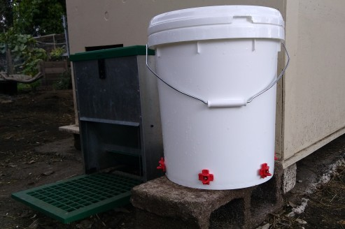 And there you have it, a covered waterer that keeps the water clean! Now I don't have to clean a water bell every day or two.