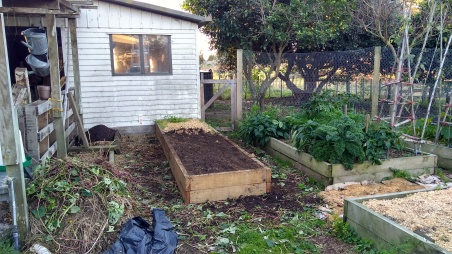 With the kumara all dug up, this raised bed was smoothed over before being covered up.