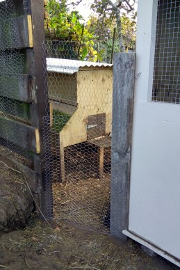 Another flexible wire gate, done mainly so the wooden end can lock into the floor of the coop, blocking the small gap between the coop floor and coop wall.