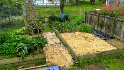 The Vege Garden is getting some much-needed attention.
